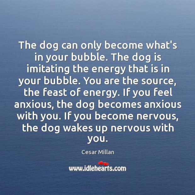 The dog can only become what's in your bubble. The dog is Image