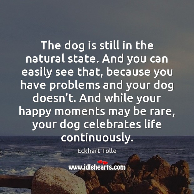 The dog is still in the natural state. And you can easily Image
