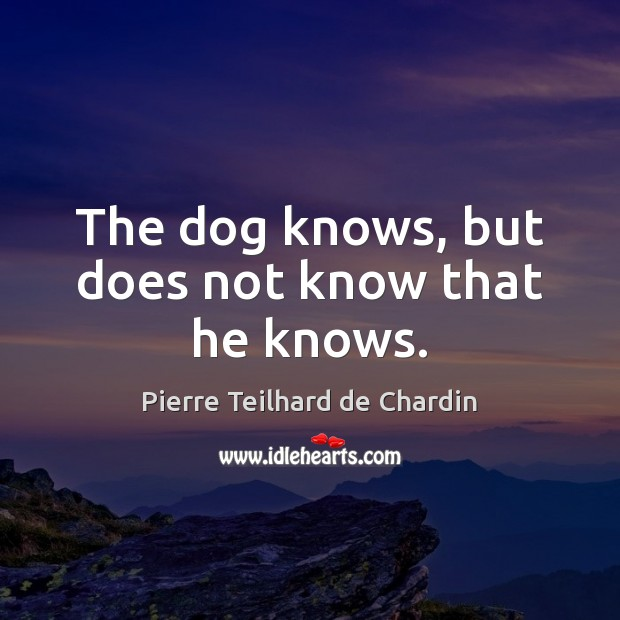 The dog knows, but does not know that he knows. Image