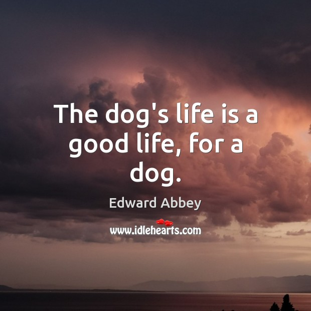 Image about The dog's life is a good life, for a dog.