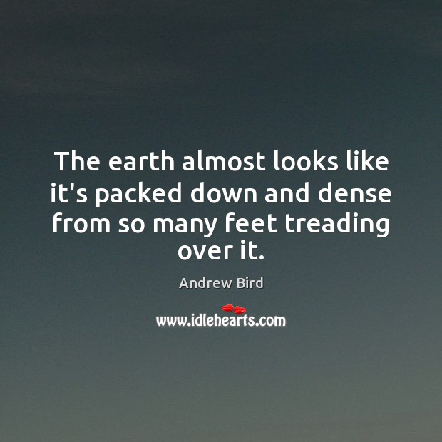 The earth almost looks like it's packed down and dense from so many feet treading over it. Image