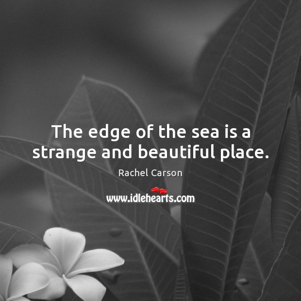 The edge of the sea is a strange and beautiful place. Sea Quotes Image