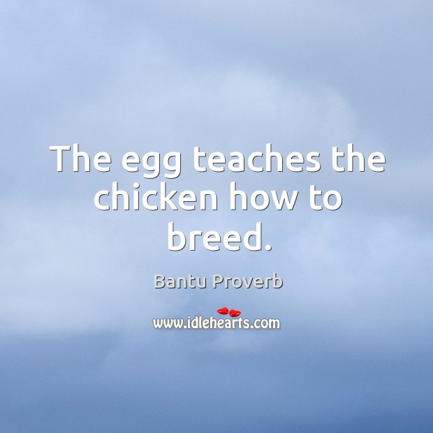 The egg teaches the chicken how to breed. Bantu Proverbs Image