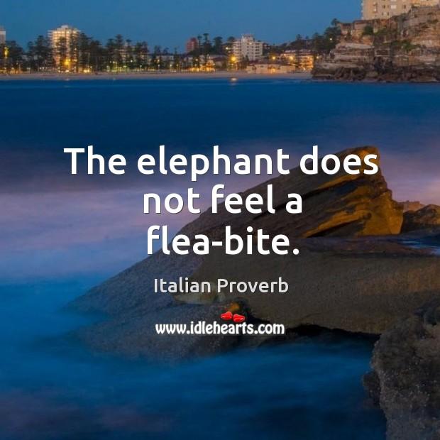 Image, The elephant does not feel a flea-bite.