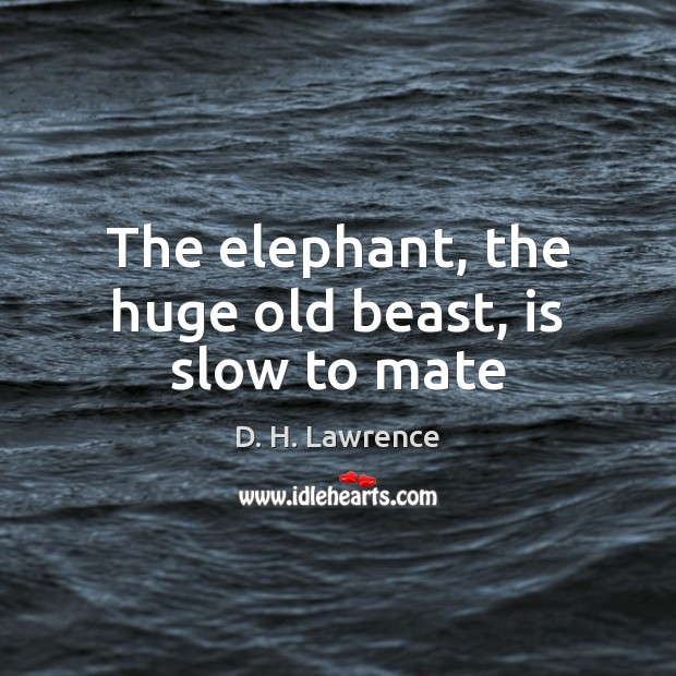 The elephant, the huge old beast, is slow to mate D. H. Lawrence Picture Quote