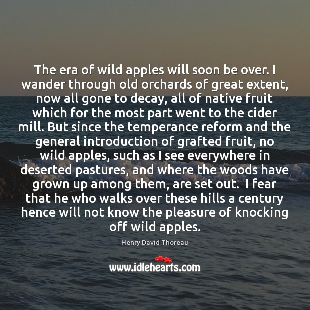 The era of wild apples will soon be over. I wander through Image