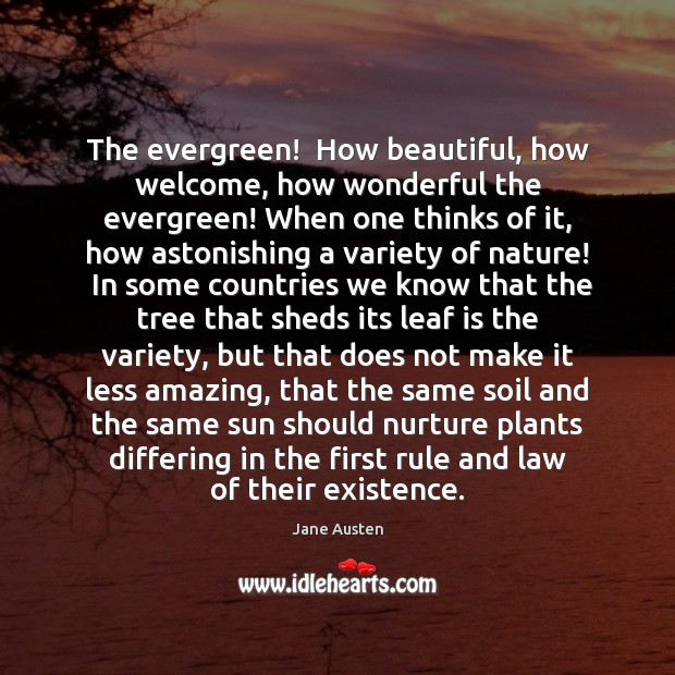 Image, The evergreen!  How beautiful, how welcome, how wonderful the evergreen! When one