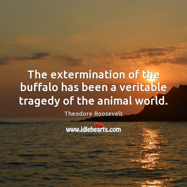 Image, The extermination of the buffalo has been a veritable tragedy of the animal world.