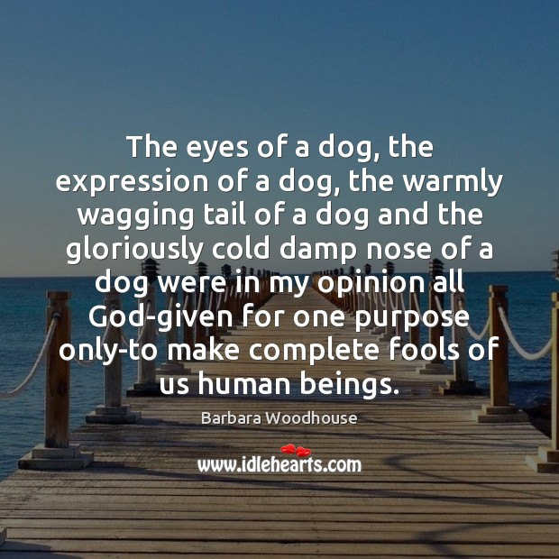 Image, The eyes of a dog, the expression of a dog, the warmly