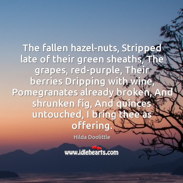 The fallen hazel-nuts, Stripped late of their green sheaths, The grapes, red-purple, Hilda Doolittle Picture Quote