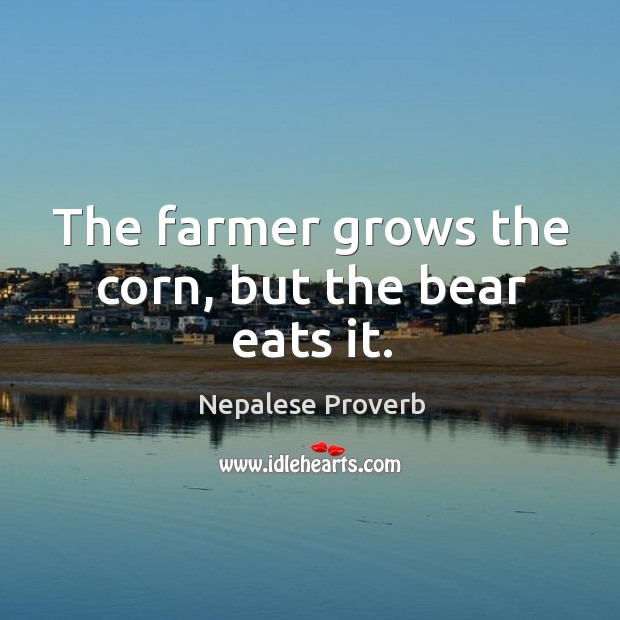 The farmer grows the corn, but the bear eats it. Nepalese Proverbs Image