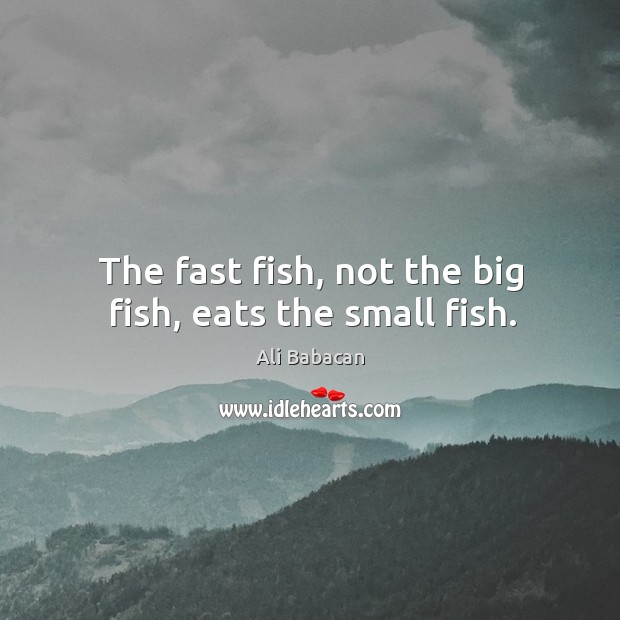 The fast fish, not the big fish, eats the small fish. Image
