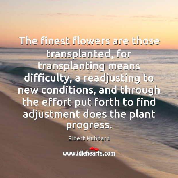 The finest flowers are those transplanted, for transplanting means difficulty, a readjusting Image