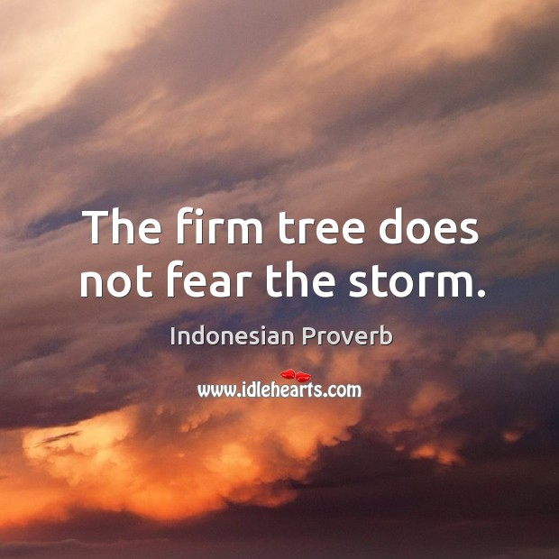 The firm tree does not fear the storm. Indonesian Proverbs Image
