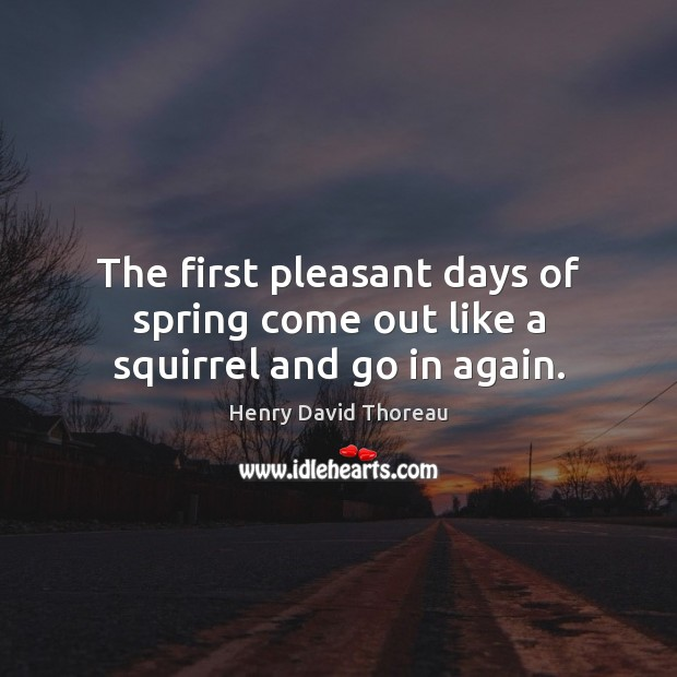 The first pleasant days of spring come out like a squirrel and go in again. Image
