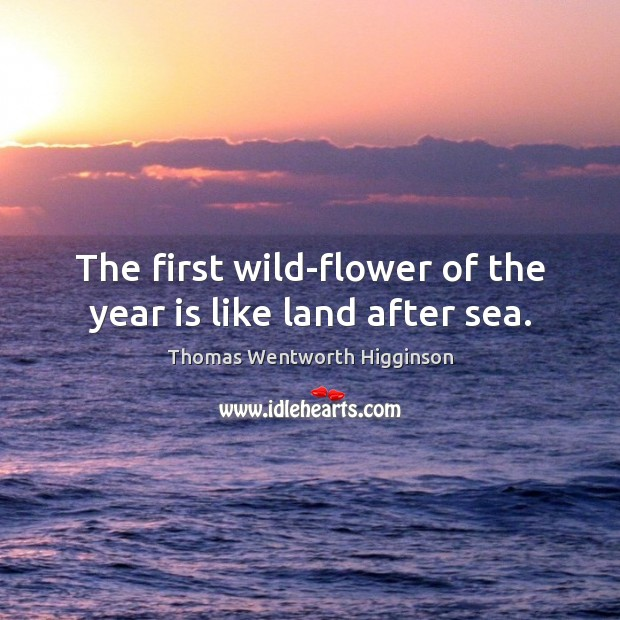 The first wild-flower of the year is like land after sea. Thomas Wentworth Higginson Picture Quote
