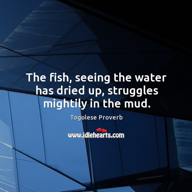 The fish, seeing the water has dried up, struggles mightily in the mud. Togolese Proverbs Image