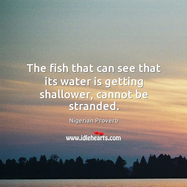 Image, The fish that can see that its water is getting shallower, cannot be stranded.