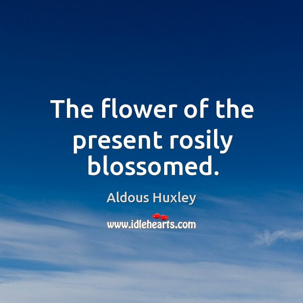 Image, The flower of the present rosily blossomed.