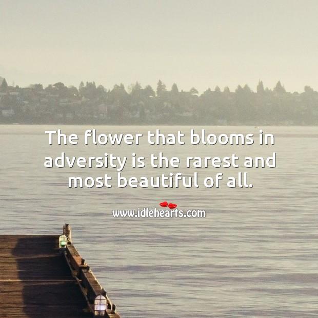 Image, Adversity, Beautiful, Blooms, Flower, Most, Most Beautiful, Rarest