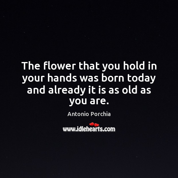 The flower that you hold in your hands was born today and already it is as old as you are. Image