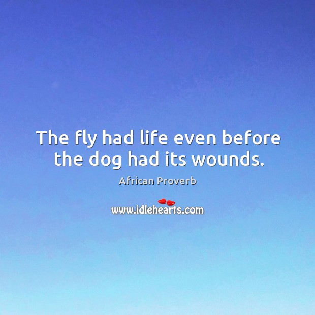 Image, The fly had life even before the dog had its wounds.