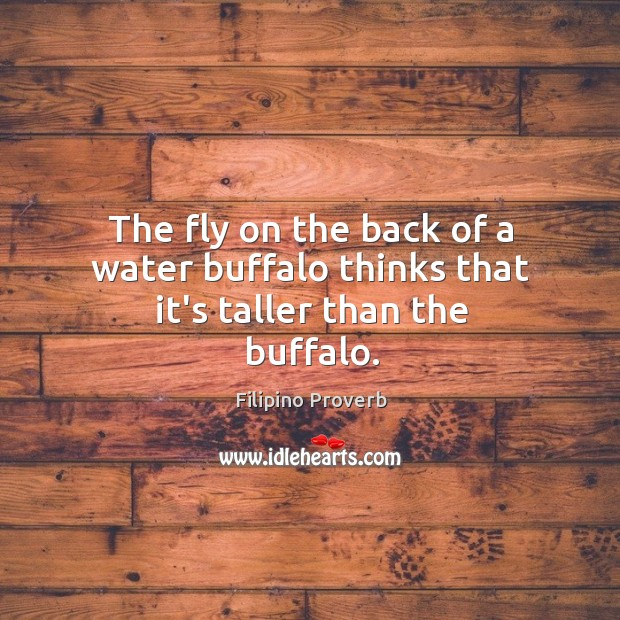 The fly on the back of a water buffalo thinks that it's taller than the buffalo. Filipino Proverbs Image