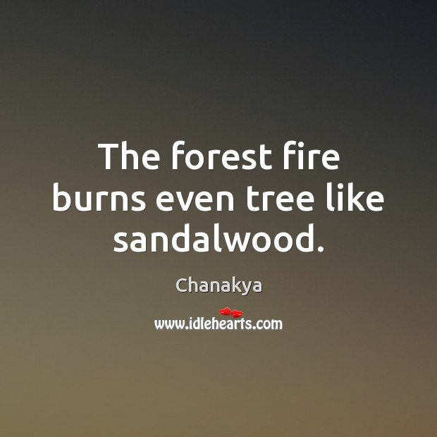 The forest fire burns even tree like sandalwood. Chanakya Picture Quote