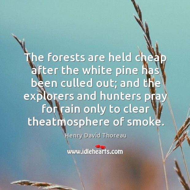 The forests are held cheap after the white pine has been culled Image
