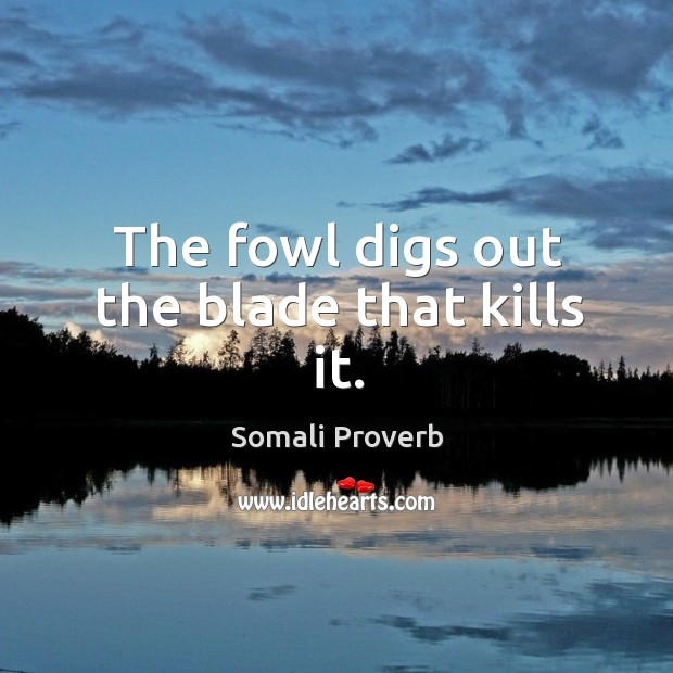 The fowl digs out the blade that kills it. Somali Proverbs Image