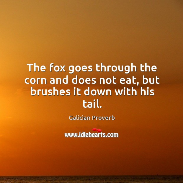 The fox goes through the corn and does not eat, but brushes it down with his tail. Image