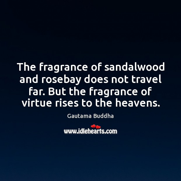 The fragrance of sandalwood and rosebay does not travel far. But the Gautama Buddha Picture Quote