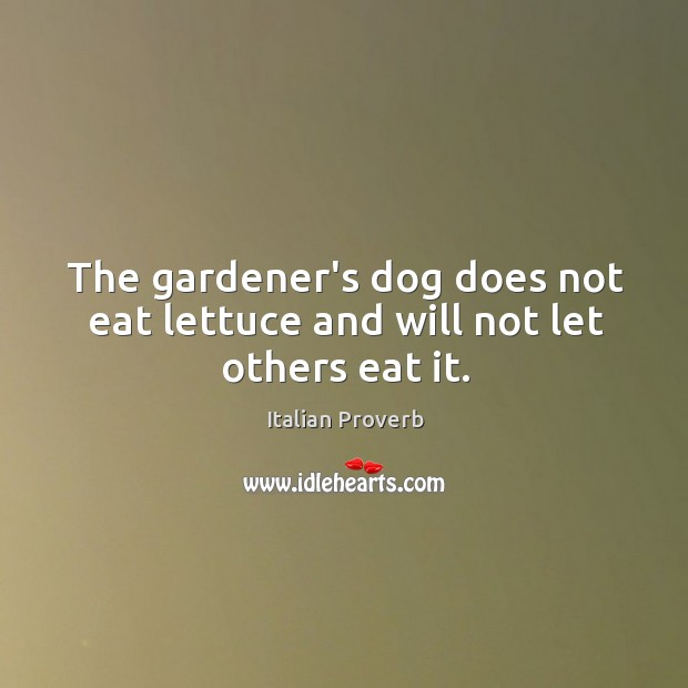 The gardener's dog does not eat lettuce and will not let others eat it. Image