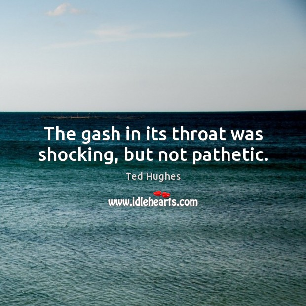The gash in its throat was shocking, but not pathetic. Ted Hughes Picture Quote