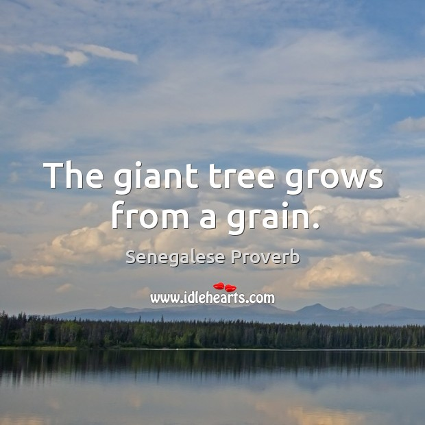 The giant tree grows from a grain. Image