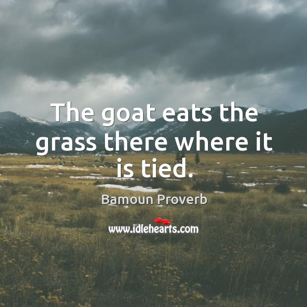 Bamoun Proverbs