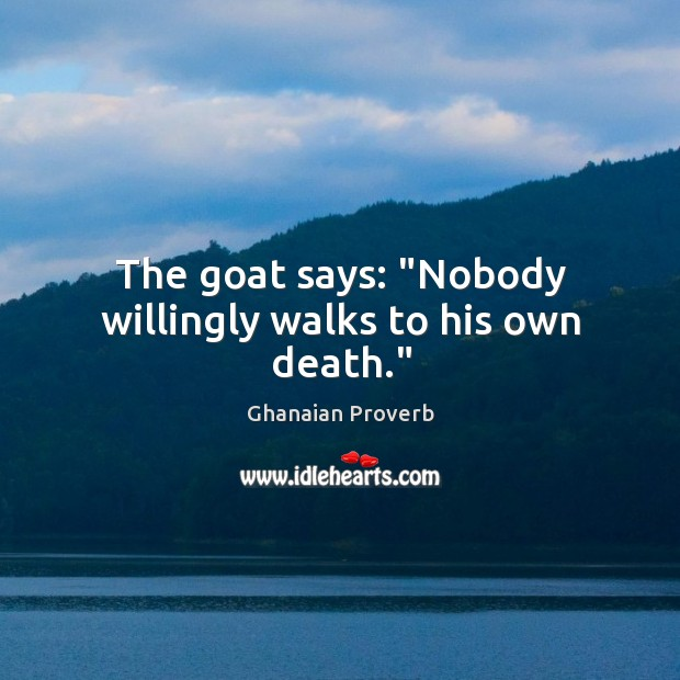 """The goat says: """"nobody willingly walks to his own death."""" Ghanaian Proverbs Image"""