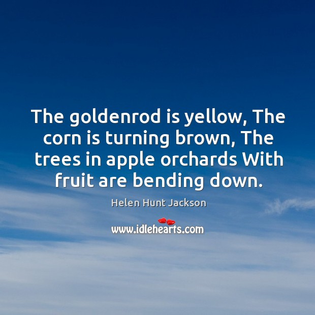 Image, The goldenrod is yellow, the corn is turning brown, the trees in apple orchards with fruit are bending down.