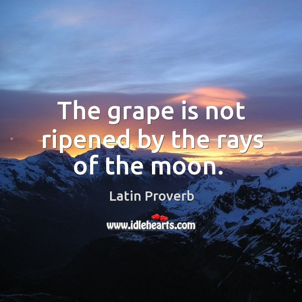 Image, The grape is not ripened by the rays of the moon.