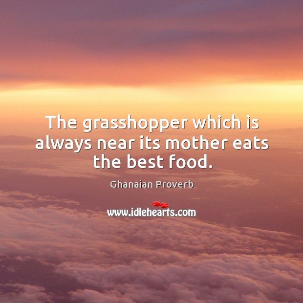 The grasshopper which is always near its mother eats the best food. Ghanaian Proverbs Image