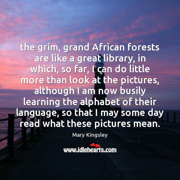 The grim, grand African forests are like a great library, in which, Image