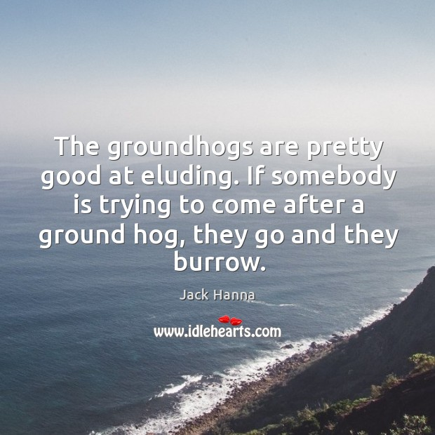 The groundhogs are pretty good at eluding. If somebody is trying to Jack Hanna Picture Quote