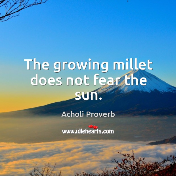 The growing millet does not fear the sun. Acholi Proverbs Image