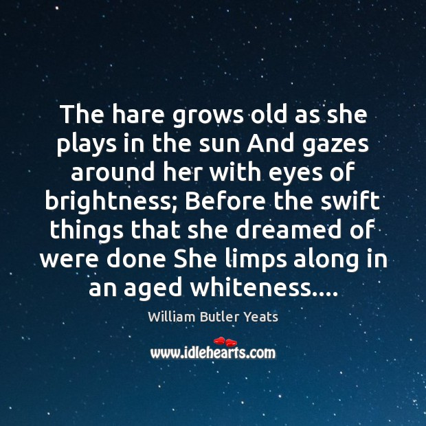 The hare grows old as she plays in the sun And gazes William Butler Yeats Picture Quote