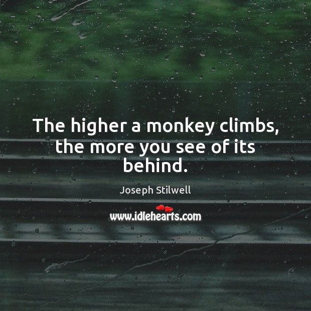 The higher a monkey climbs, the more you see of its behind. Image