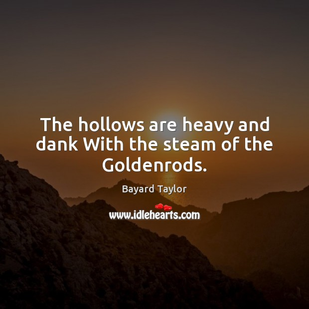 The hollows are heavy and dank With the steam of the Goldenrods. Bayard Taylor Picture Quote