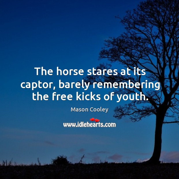 The horse stares at its captor, barely remembering the free kicks of youth. Image