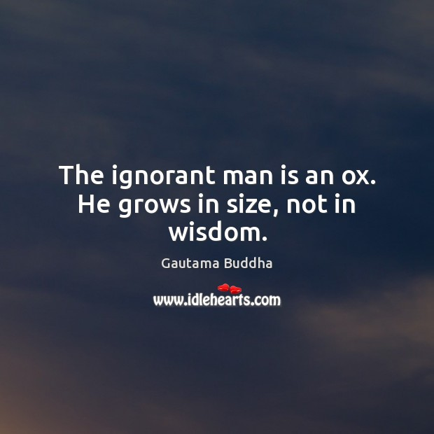 The ignorant man is an ox. He grows in size, not in wisdom. Image