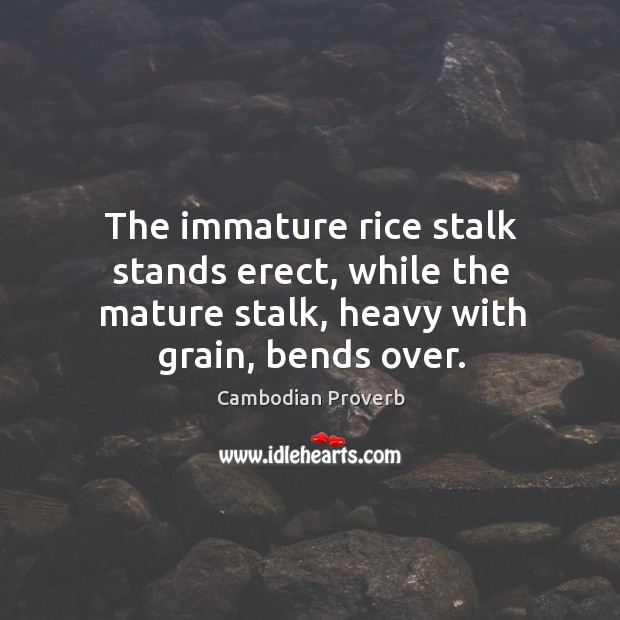 The immature rice stalk stands erect, while the mature stalk, heavy with grain, bends over. Cambodian Proverbs Image
