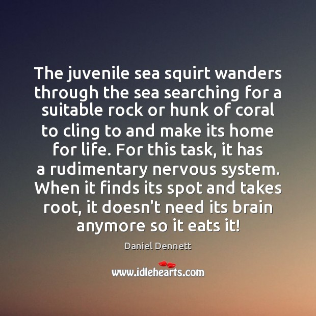 Image, The juvenile sea squirt wanders through the sea searching for a suitable